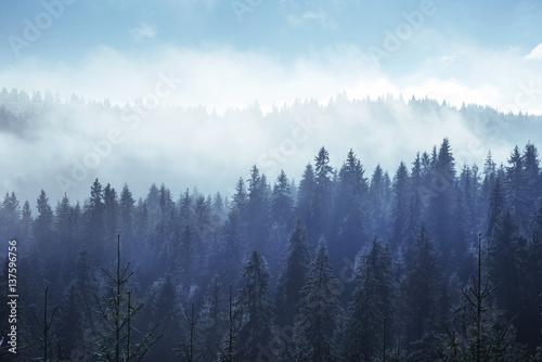 drzewa-iglaste-we-mgle-i-chmurach-karpaty-ukraina
