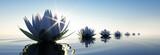 Fototapeta Kwiaty - Lotusblüten im Sonnenuntergang 2