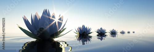Obraz lilia wodna lilia-wodna-do-kuchni