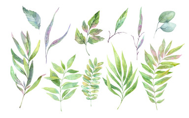 FototapetaHand drawn watercolor illustration. Spring leaves and branches. Floral design elements. Perfect for invitations, greeting cards, blogs, posters and more
