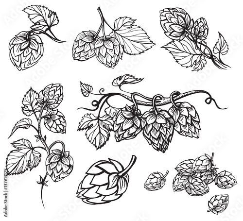 Fotografie, Obraz  Hand drawn engraving style Hops set