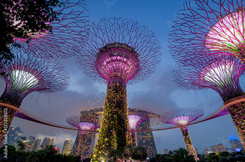 Photo  Supertree Grove at Gardens by the Bay in Singapore.