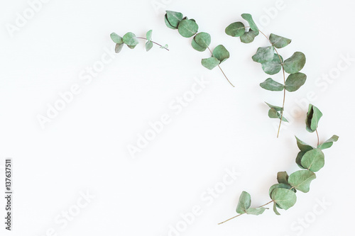Foto op Canvas Bloemen Frame made of eucalyptus branches. Flat lay, top view