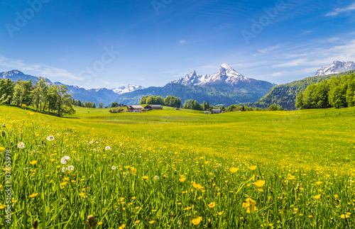 Fotobehang Pistache Idyllic landscape in the Alps with blooming meadows in summer