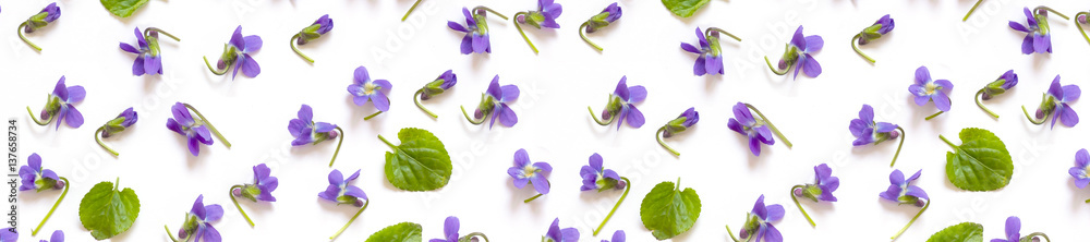 Fototapety, obrazy: pattern panorama of violet and green leaves