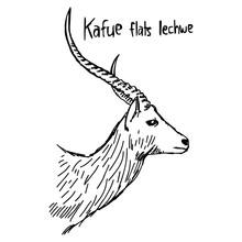 Kafue Flats Lechwe - Vector Il...