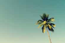 Coconut Palm Trees And Shining Sun With Vintage Effect.