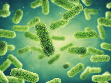 Bacteria , Germ Infection And Bacterial Disease Epidemic