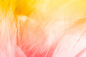 FototapetaColor trends feather texture background