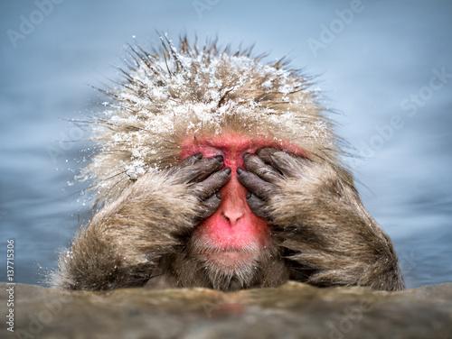Foto op Plexiglas Aap Lustiger Affe versteckt sich