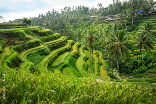 Poster Rijstvelden Bali rice fields