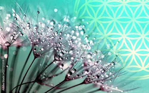 Tuinposter Boeddha Blume des Lebens - Leichtigkeit - Frisch