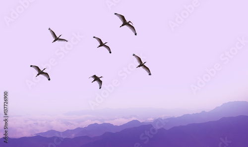 Tuinposter Purper Flying birds over purple background landscape