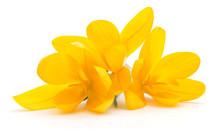 Yellow Wild Flowers.