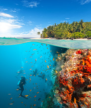 Group Of Scuba Divers Exploring Coral Reef
