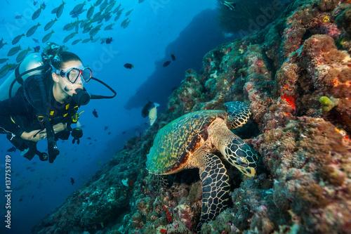 Woman scuba diver exploring sea bottom #137753789