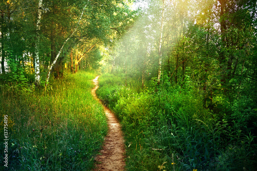 Crédence de cuisine en verre imprimé Route dans la forêt Path footpath in the deciduous forest in spring in the summer in the morning sun. Young lush green trees in the forest.