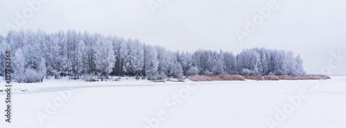 Poster Fleur Frozen trees covered snow or hoarfrost. Winter landscape scene