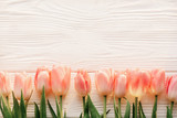 Fototapeta Tulipany - pink tulips on white rustic wooden background flat lay. top view of spring flowers in soft morning sunlight with space for text. hello spring. banner and border