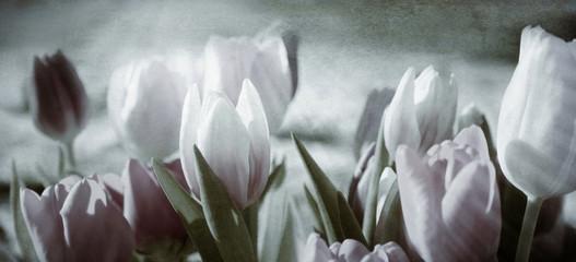 Panel Szklany Podświetlane Kwiaty tinted tulips concept