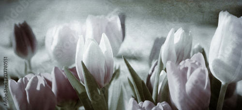 Foto-Duschvorhang - tinted tulips concept