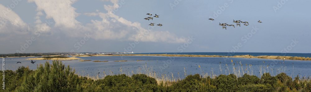 Fototapety, obrazy: flora and fauna at oasis of sand with wild geese  beautiful panorama