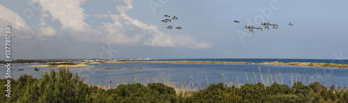 Fotografie, Obraz  flora and fauna at oasis of sand with wild geese  beautiful panorama