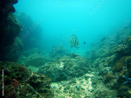 Spoed Foto op Canvas Turkoois Underwater Landscape