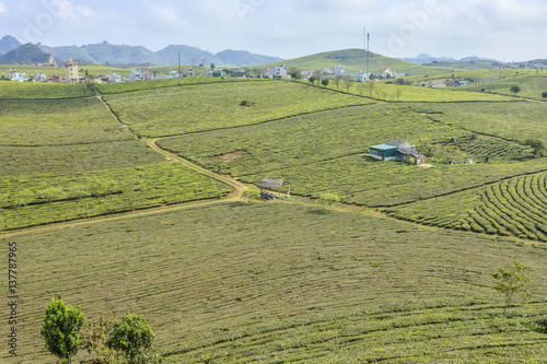 Foto op Canvas Olijf Highland Moc Chau at north Vietnam