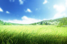 Sunny Morning And Field Of Grass