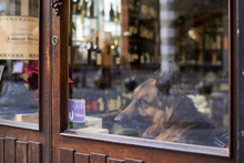 Dog From Window In Wine Shop