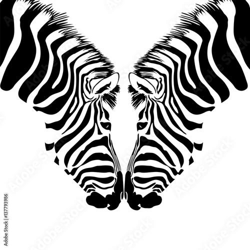 couple-zebra-head-savannah-animal