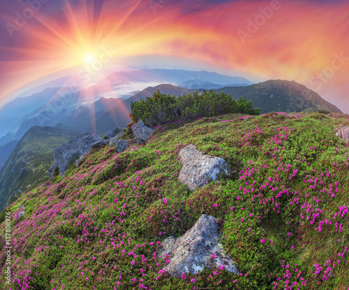 Rhododendron Valley Black Mountain Wall mural