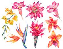 Watercolor Set Of Vintage Floral Tropical Natural Elements