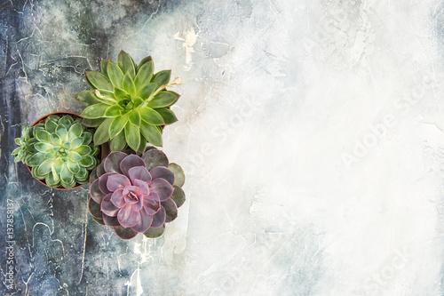 Fototapeta Succulent plants Minimal floral flat lay obraz