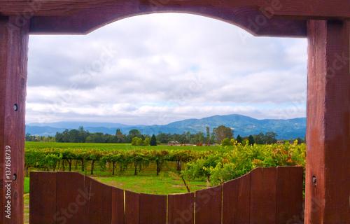 Fotografie, Obraz  Napa winery