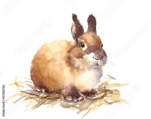 Fotografie, Obraz  Watercolor Cute Baby Bunny Rabbit Hand Drawn Pet Animal Illustration isolated on