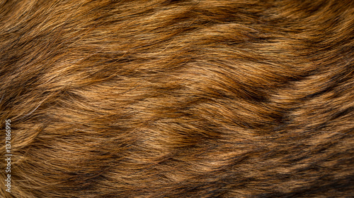 Brown and beige dog fur texture Fototapeta