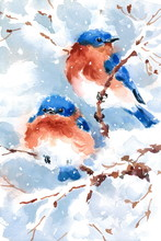 Two Bluebirds Birds Sitting On...