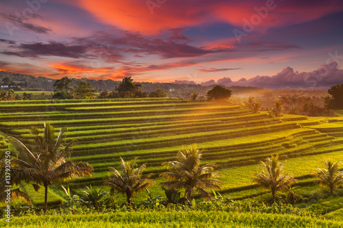 Poster Crimson Beautiful sunrise over the Jatiluwih Rice Terraces in Bali, Indonesia