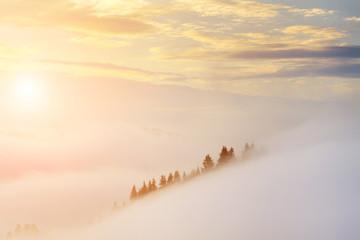 FototapetaAmazing misty sunrise in the mountains in summer