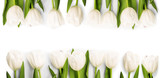 Fototapeta Tulipany - White Tulips with shadow