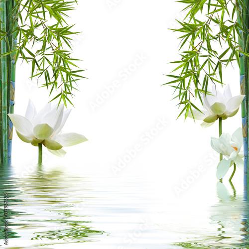 Doppelrollo mit Motiv - reflets aquatiques de bambous et lotus blanc