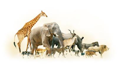 Safari Animals Walking Side Horizontal Banner