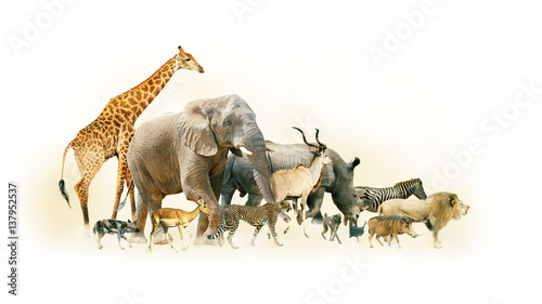 Vászonkép Safari Animals Walking Side Horizontal Banner