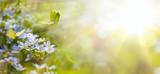 Fototapeta Kwiaty - Easter spring flower background; fresh flower and yellow butterfly on green background