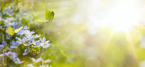 Poster Spring Easter spring flower background; fresh flower and yellow butterfly on green background