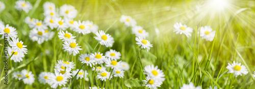 Foto op Aluminium Madeliefjes Bunte Blumenwiese im Frühling und Sonnenstrahlen