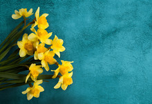 Beautiful Card With Yellow Flowers Daffodils On Turquoise Texture.