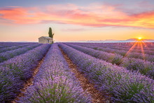Sunrise In Valensole